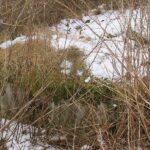 Kalby plantage, dækket bunker
