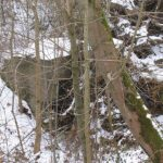 Intakte bunkere i Kalby plantage, tømmerrum