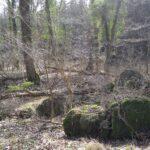 Rester af batteriet i Allerup Krat, sprængt bunker
