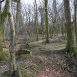 Hyrup skov, batteriet