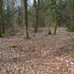 Hyrup skov, spor af skyttegrav