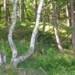 Hornbæk batteri, fundamenter i skoven